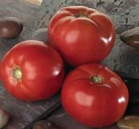 БЕЛЛА РОСА F1 - семена томата, Sakata, фото 1