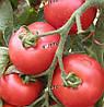 ТОРНАДО F1 - томат индетерминантный, Semo