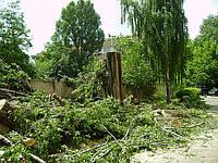 Спил деревьев Киев цена.