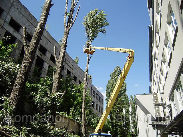 Улаление деревьев, спиливание дерева. Кронирование деревьев.