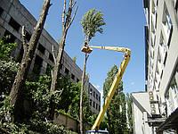 Улаление деревьев, спиливание дерева. Кронирование деревьев., фото 1