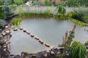 Затем армировали верхние борта пруда, укрепили природным камнем на спец раствор. Высадили водные растения (рогоз, камыш, осока, тростник) в щебень в зоне регенерации и наполнили водой. Под растениями в щебне уложены форсунки, подающие воду на очистку