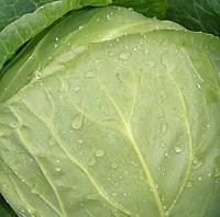 Дита семена капусты б/к ранней, фото 1