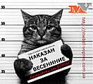 Кот снова наказан.