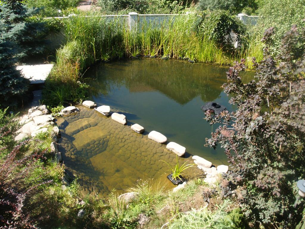 Через год я обложил галькой на спец раствор детскую часть пруда. Так пруд стал выглядеть летом 2015 года. Вода чистая и прозрачная, самое главное - живая. Стрекозы, ласточки и дикое голуби пьют воду из пруда. Мы  часто купается в пруду в летнюю жару