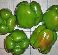 ЮПИТЕР- семена перца сладкого, 500 семян, Syngenta, фото 1