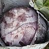 РЕСКЬЮ F1 - семена краснокочанной капусты, 2 500 семян, Syngenta