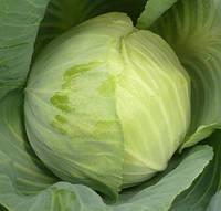 БЛОКТОР F1 - семена белокочанной капусты, 2 500 семян, Syngenta, фото 1