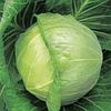 КИЛАГРЕГ F1 - семена белокочанной капусты,  2500 семян, Syngenta