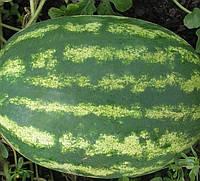 МЭДИСОН F1 - семена арбуза, 1 000 семян, CLAUSE, фото 1