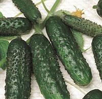 МАША F1 - семена огурца партенокарпического, 1000 семян, Semenis, фото 1
