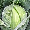 САНТАРИНО 60  F1 - семена белокочанной капусты, 2 500 семян, Syngenta