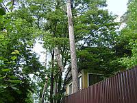 Валка деревьев (067) 409 30 70