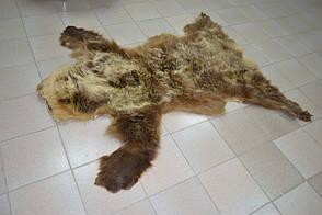 Шкура-килим з ведмедя