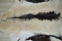 Шкура козы, фото 3