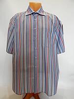 071КР Мужская рубашка с коротким рукавом BEXLEYS, фото 1