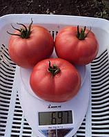 Томат Пинк Свитнес F1 Lark Seeds 500 семян
