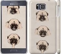 "Чехол на Samsung Galaxy Alpha G850F Мопсики ""2884c-65"""