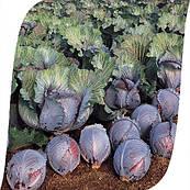 Капуста Рокси F1 Seminis 2500 семян