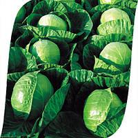 Капуста Гермес F1 Seminis 2500 семян, фото 1