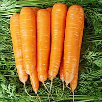 Морковь гибрид средне-поздняя МАТЧ F1 Фасовка 25000 и 100 000 сем.