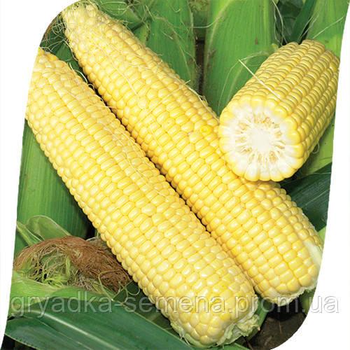Кукуруза Сигнет F1/Signet F1 Seminis 5000 семян