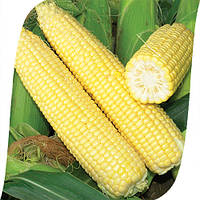 Кукуруза Сигнет F1/Signet F1 Seminis 5000 семян, фото 1