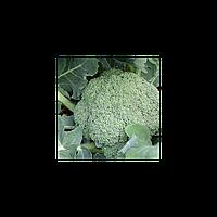 Баро Стар F1 семена капусты брокколи (NongWoo Bio, Корея)
