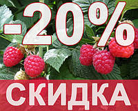 СКИДКА -20% на малину