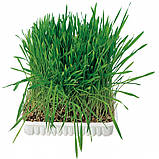 Трава Trixie Cat Grass для кошек, 100г, фото 3