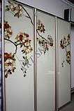 Раздвижные двери для шкафа купе, фото 2