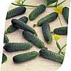 Огурец Меренга F1 Seminis 250 семян