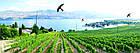 Динамический отпугиватель птиц КРУК+ труба и флагшток, фото 5