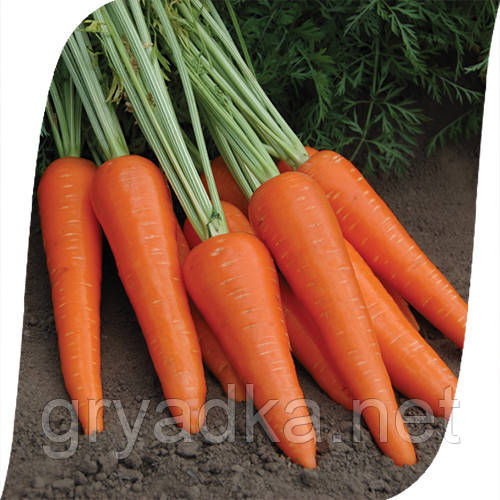Морковь Абликсо F1/ Ablixo F1 Seminis 200 000 семян