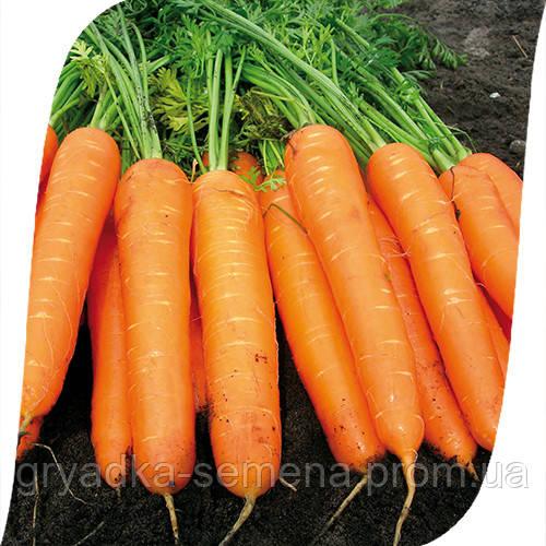 Морковь Карведжо F1 Seminis 200 000 семян