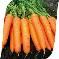Морковь Карведжо F1 Seminis 200 000 семян , фото 1