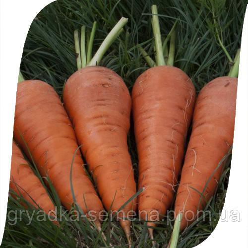 Морковь Санта Круз F1 Seminis 1 млн семян