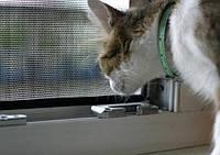 Кот выпал из окна. Что делать?