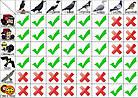 Визуальный отпугиватель птиц ХИЩНИК-2, фото 2