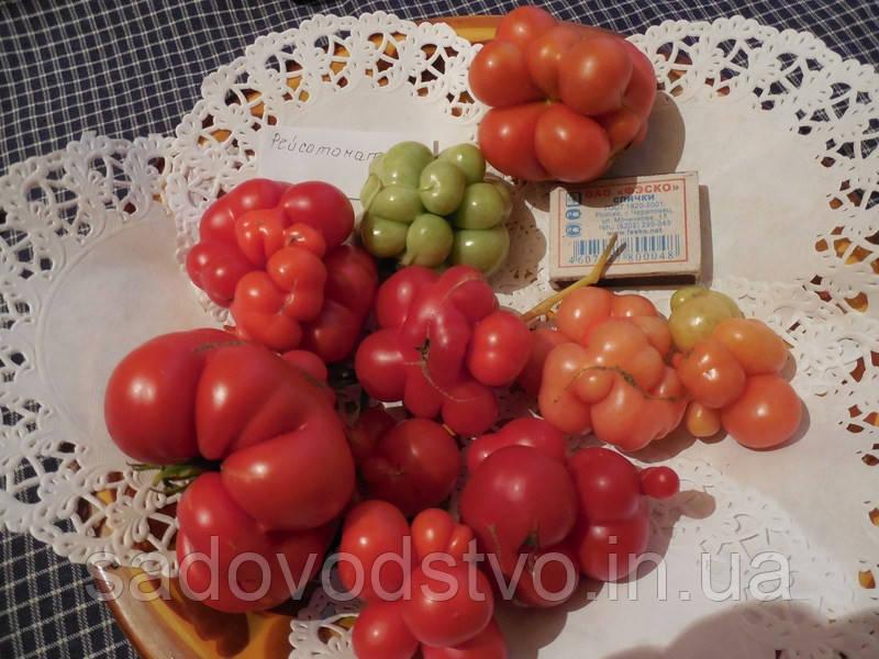 Райсе  томат 50