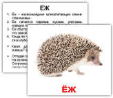 «Дикие животные с фактами» МИНИ 40 Карточки Домана