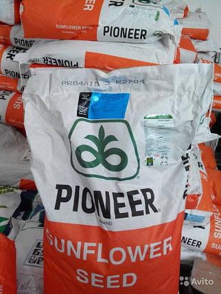 Подсолнечник/подсолнух  Гранстар/Экспресс PIONEER/Пионер П64LЕ25/P64LЕ25  (Болгария) устойчивый к заразихе А-G, фото 2