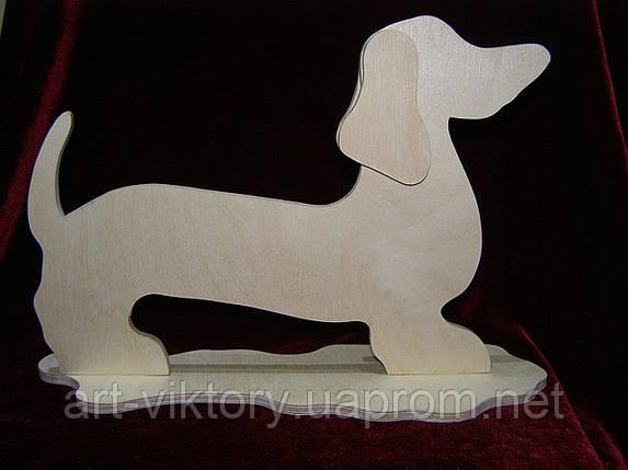 Собака Такса, фото 2