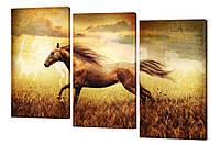 Модульная картина 271 Конь