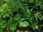 Мини-пакеты семян зелени