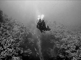 Фотоотчет о клубном сафари по Северу Красного моря.