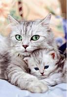 Набор алмазной вышивки Кошка с котенком KLN 30 х 40 см (арт. FS037)