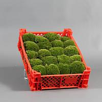 Мох флористический. Bol moss p/box Leacobryum