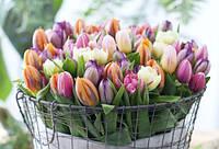 С наступлением весны и приближающимся 8 Марта!