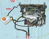 Патрубок шланг от радиатора к расширительному бачку пароотводящий Ланос Lanos Корея 96351848, фото 4